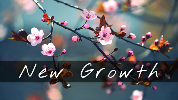 New Growth Image
